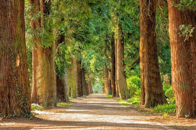 Chodzenie po parku czy w lesie to świetne panaceum na wiosenn przesilenie