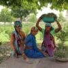 Kobiety zbierają rośliny pod Taj-Mahal - Ashwagandha